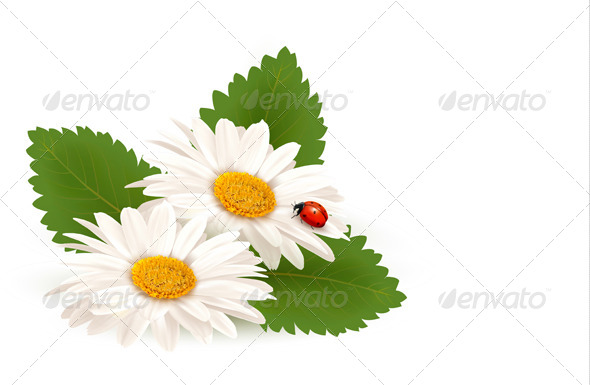 GraphicRiver Nature Summer Daisy Flower with Ladybug 5055491