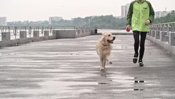 Download Teenage boy Training Big Labrador Dog nulled download
