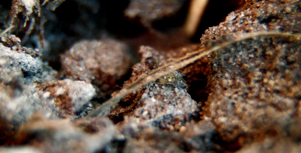 The Ants 1