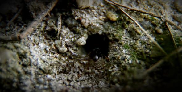 The Ants 2