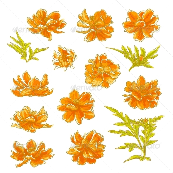 GraphicRiver Collection of Cosmos Flowers 5061096