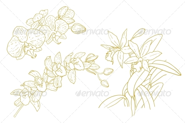 GraphicRiver Set of Outlined Orchids 5061097