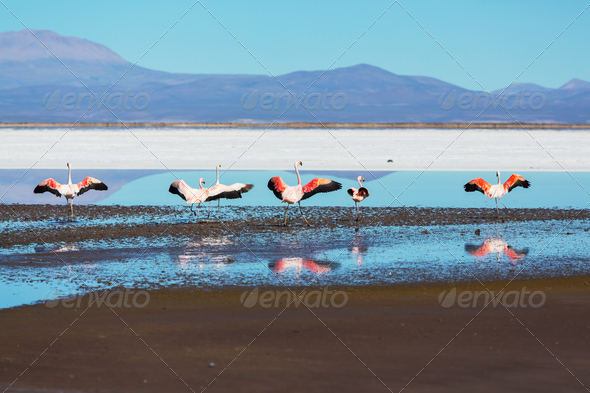 Flamingo - Stock Photo - Images