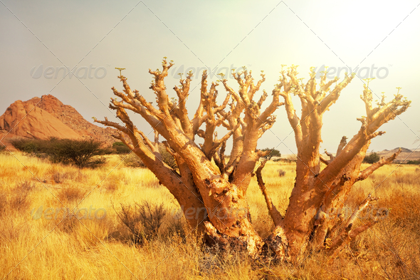 African landscapes - Stock Photo - Images