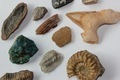 Assorted Fossils and Minerals - PhotoDune Item for Sale