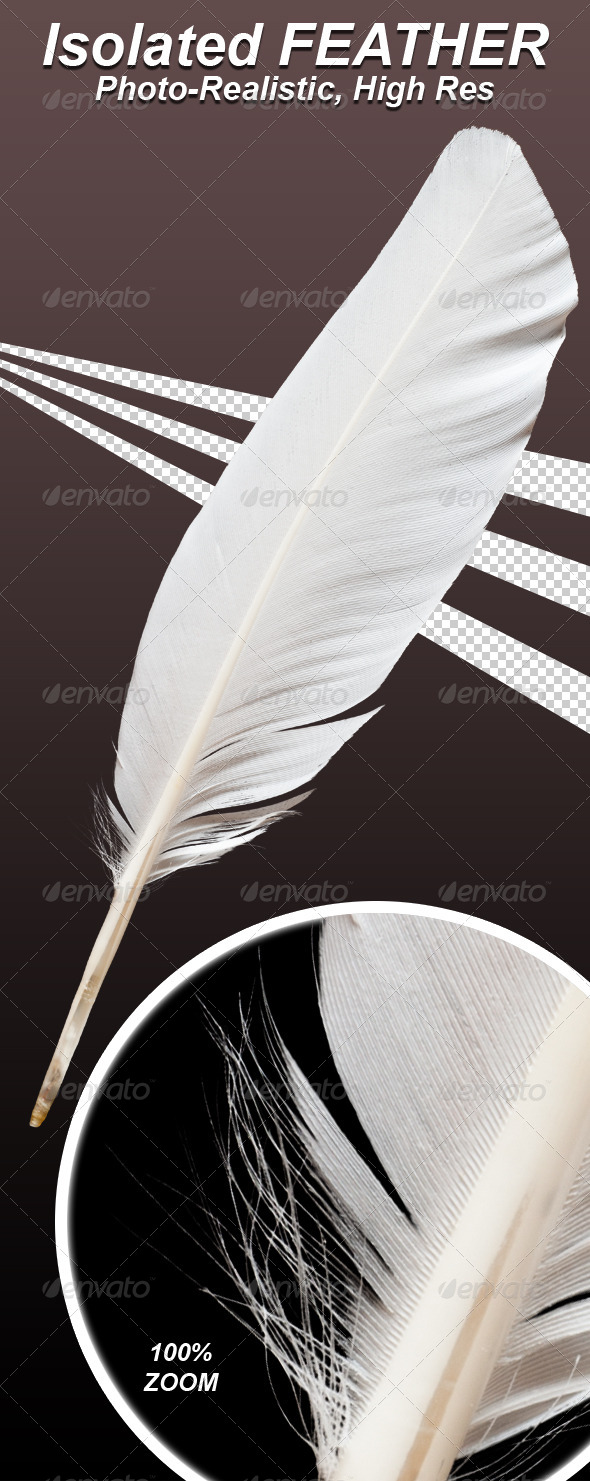 GraphicRiver Photo-Realistic Isolated Feather 5071684