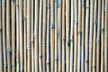Bamboo Texture - PhotoDune Item for Sale