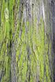 Tree Bark Texture - PhotoDune Item for Sale