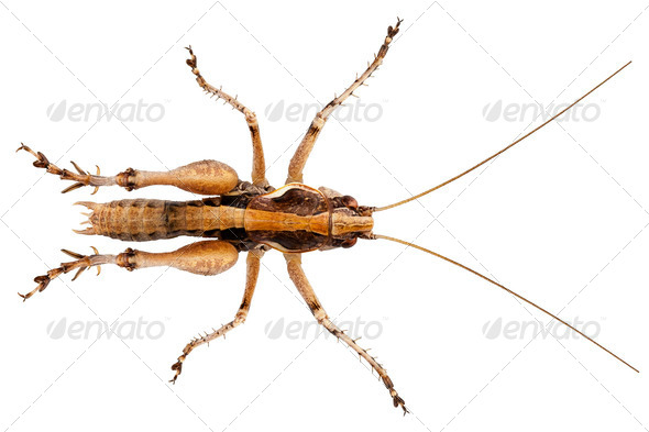 grasshopper with long legs - Stock Photo - Images