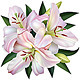 White Lily - GraphicRiver Item for Sale