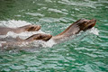 Harbor seals - PhotoDune Item for Sale