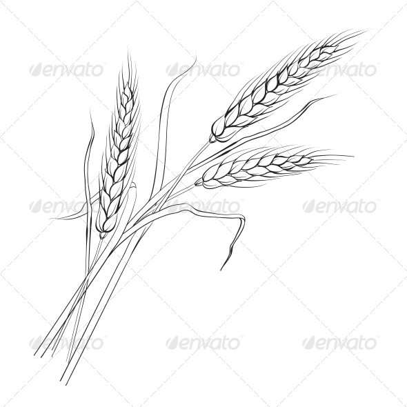 GraphicRiver Ears of Wheat 5094360