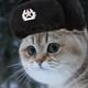 Ushanka_Cat
