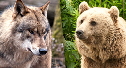 Wolfs & Bears