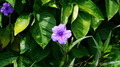 Small Violet Tropical Flower - PhotoDune Item for Sale