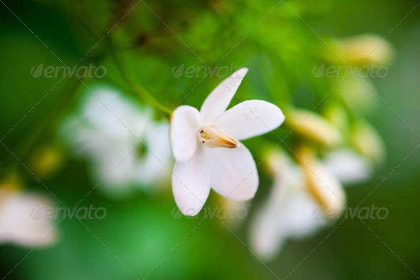Flower - Stock Photo - Images