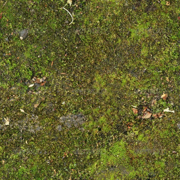 Ground Covered With Moss - 3DOcean Item for Sale