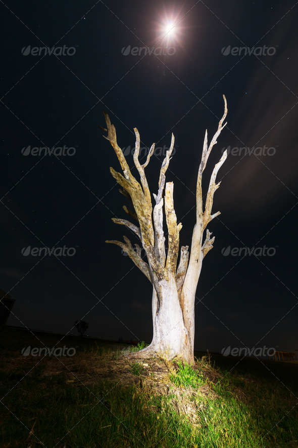 Moonlight - Stock Photo - Images