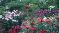 The Garden - PhotoDune Item for Sale
