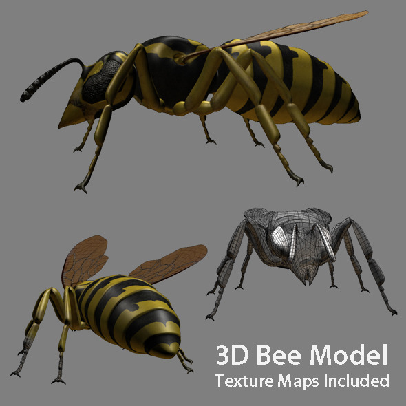 3DOcean Low poly 3D model of Bee 3D Models -  Animals  Insects and small animals 527754