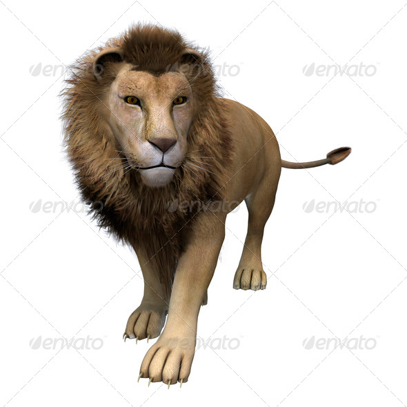 Male Lion  - Stock Photo - Images