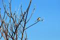 Blue Bird - PhotoDune Item for Sale