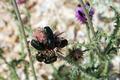 Maybugs at Work - PhotoDune Item for Sale