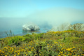 Coast Fog Wildflowers - PhotoDune Item for Sale