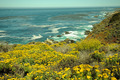 Ocean Wildflowers - PhotoDune Item for Sale