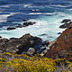 Wildflowers at Ocean - PhotoDune Item for Sale