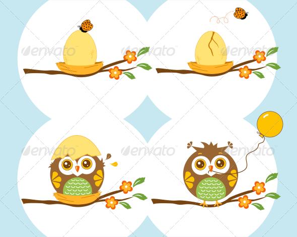 Little Owl Birth