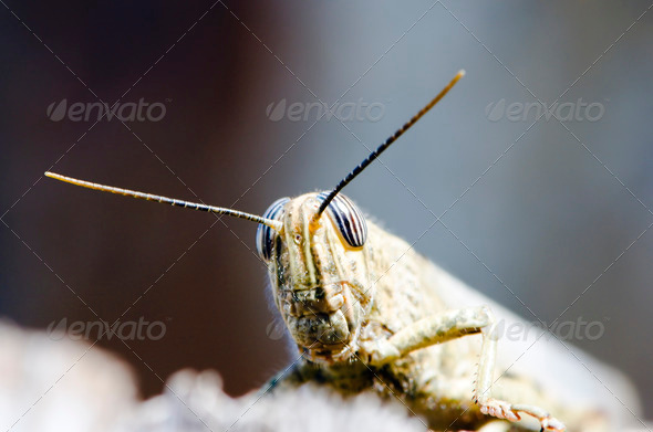 Cricket into Camera - Stock Photo - Images