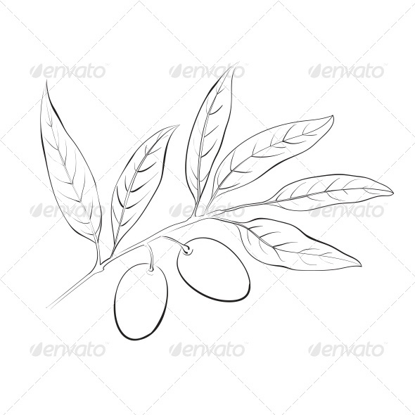 GraphicRiver Hand Drawn Olive Branch 5190384