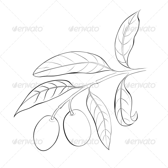 GraphicRiver Hand Drawn Olive Branch 5190391