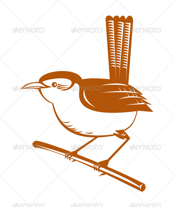 GraphicRiver wren bird perched on branch 5191961