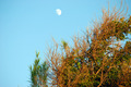 Daylight Moon - PhotoDune Item for Sale