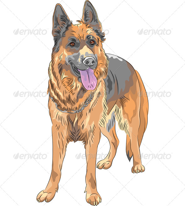German Shepherd Dog - Animals Characters