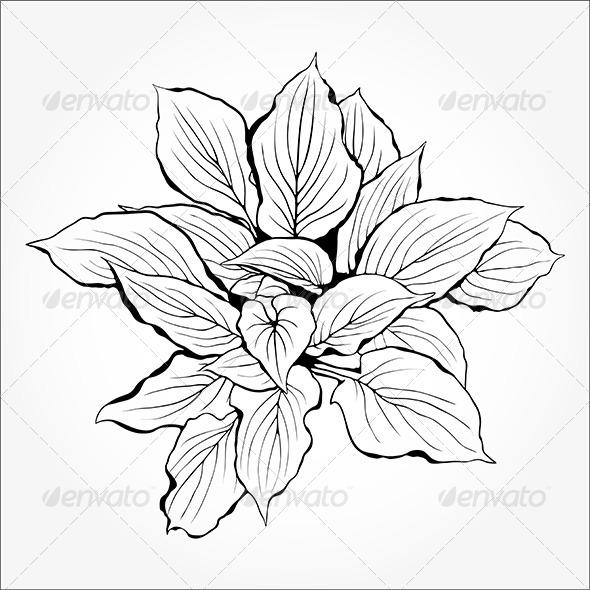 GraphicRiver Plant Silhouette 5207967