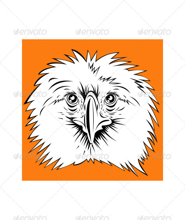 GraphicRiver Philippine Eagle head 5208172