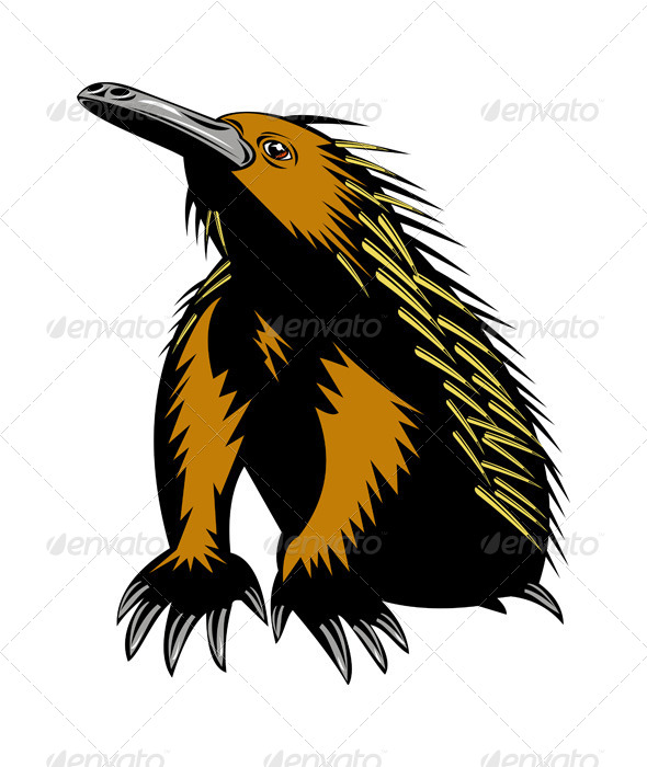 GraphicRiver Spiny Anteater or Echidna 5208174