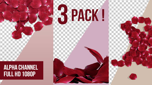 3D Rose Petals Transition 3 Pack