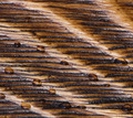 Wood texture - PhotoDune Item for Sale