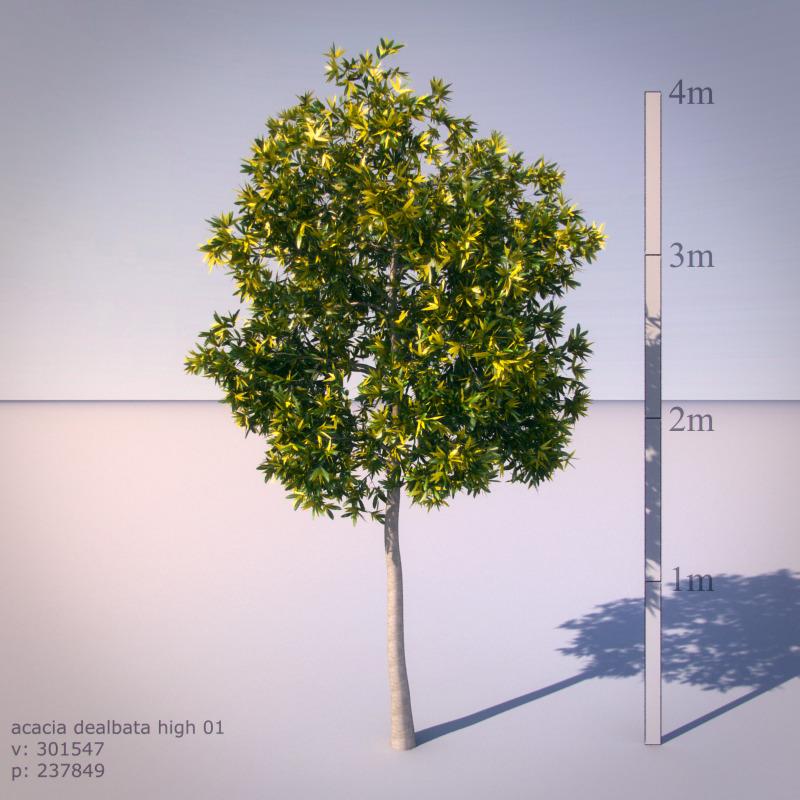 3DOcean Acacia Dealbata 535597