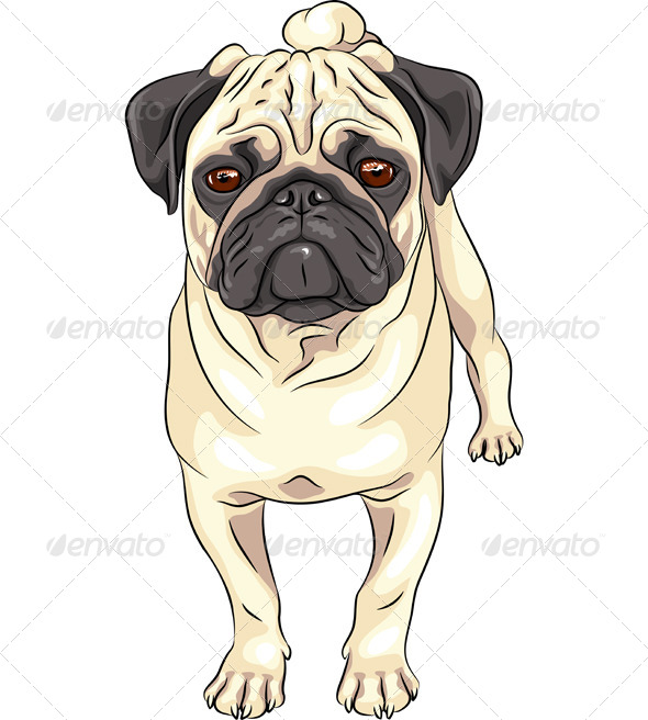GraphicRiver Vector Sketch Dog Pug Breed 5219586