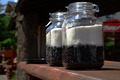 jars with blueberries - PhotoDune Item for Sale