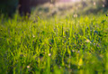 Sunny Morning Meadow (Grass) - PhotoDune Item for Sale