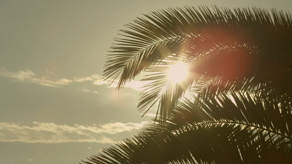 Sunset Through Palm Tree Leaves 2-Pack