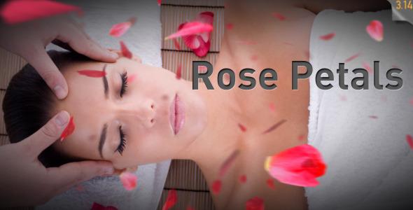 VideoHive Rose Petals falling 537714