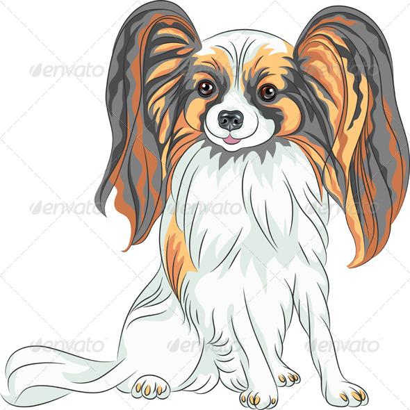 GraphicRiver Papillon Dog Breed 5229799