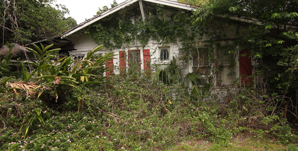 Condemned House Overgrown With Plants